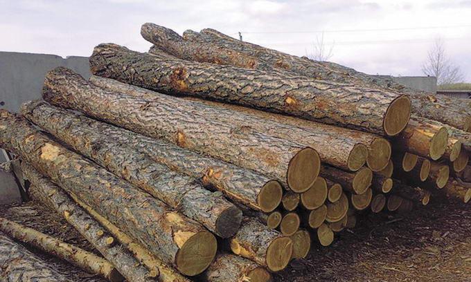 вантажівки з деревиною